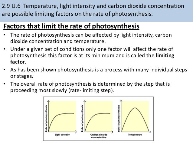 the rate of photosynthesis determined by We can then determine a rough estimate of how quickly because et50 is inversely related to the rate of photosynthesis photosynthesis: biology lab related.