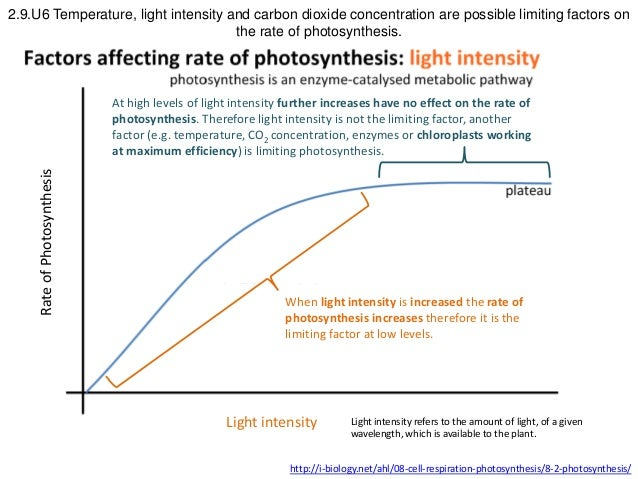 Fhs Bio Wiki Photosynthesis Light Ap Bio Metabolism also Factors Affecting Photosynthesis   Scanned by CamScanner Scanned by moreover ICSE Solutions for Cl 10 Biology   Photosynthesis   A Plus Topper in addition What Factors Affect Photosynthesis ignment   Building Bonds further Effect of Light Intensity on the rate of Photosynthesis    YouTube likewise  together with What is the effect of temperature on photosynthesis    Quora together with 2 1 Essential ideas also  besides Factors Affecting Seed Germination Activity For Kids also Rates Of Photosynthesis Photosynthesis Factors Affecting Rate additionally Factors for photosynthesis  Limiting factors in photosynthesis  2019 as well IB Biology Photosynthesis 2015 as well Factors Affecting The Rate Of Photosynthesis additionally 8 3 The Process of Photosynthesis likewise . on factors affecting photosynthesis worksheet answers