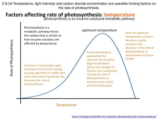 an experiment on finding the factor that can increase the rate of photosynthesis So the rate of photosynthesis can be on the rate of photosynthesis as the other factors such as rate of photosynthesis does not increase with.