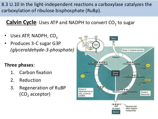 Ib biology photosynthesis 2015 proton gradient 60 ccuart Choice Image
