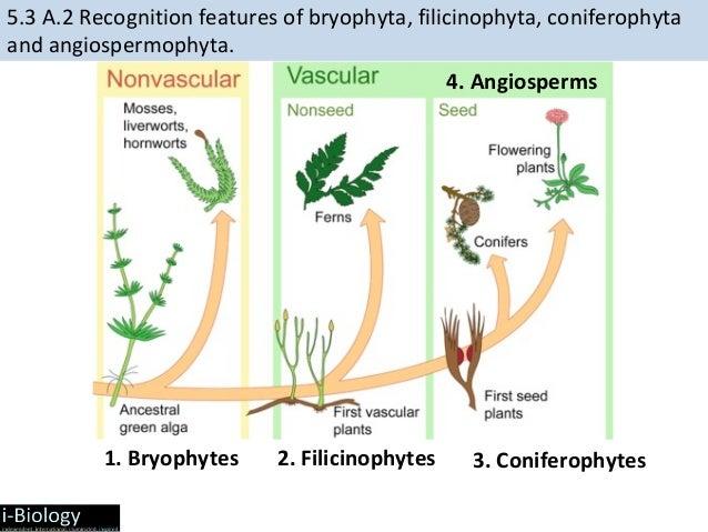 Ib Biology Evolution 2015