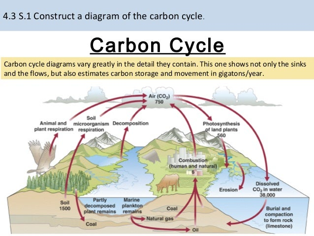 Carbon cycle complex diagram online schematic diagram ib biology ecology optional topic c 2015 rh slideshare net phosphorus cycle diagram carbon cycle examples ccuart