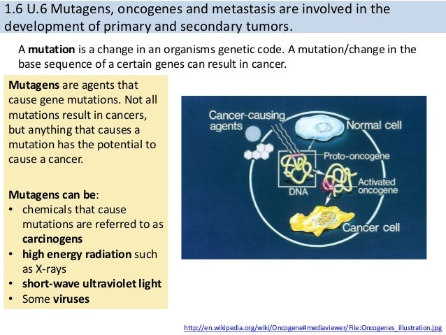 Article in addition Bioelectrical Impedance As A Diagnostic Factor In The Clinical Practice And Prognostic Factor For Survival In Cancer Patients Prediction Accuracy And Reliability 2155 6210 1000121 together with Ib Biology 16 Cell Division as well 2006chapter9 likewise Acute Myeloid Leukemia 16015644. on cancer and radiation mutations diagram