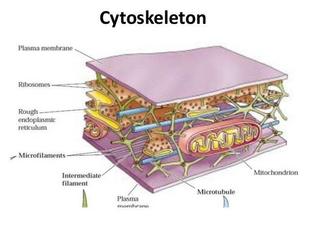 1.1 cell structure
