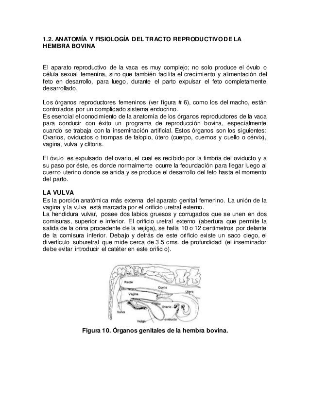 1.anatomia y fisiologia.doc