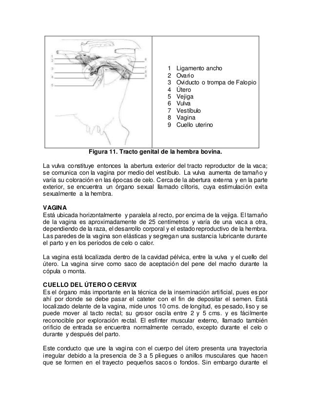 1.anatomia y fisiologia.doc