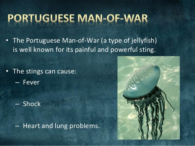 Portuguese Man Of War Jellyfish Sting Symptoms - Best Fish ...