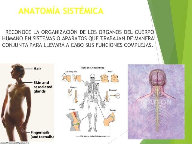 1 1 Estructuras Y Funciones Básicas Del Cuerpo Humano