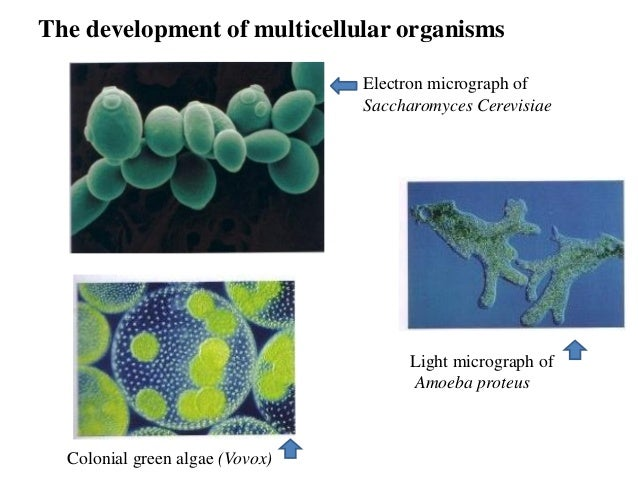 an overview on biological cell membranes and its classical experiments (mainly cholesterol in animal cell membranes) are also found in biological membranes in plants and algae, the galactosyldiacylglycerols the miller and urey experiment cell membranes contain a variety of biological molecules.