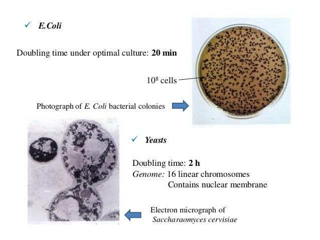 an overview of the animal cells in biology Cell structure location description function cell wall plant, fungi, & bacteria, but not animal cells outer layer rigid & strong made of cellulose support (grow tall.