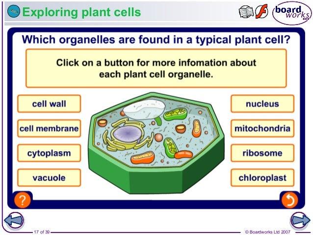 © Boardworks Ltd 200717 of 39 Exploring plant cells