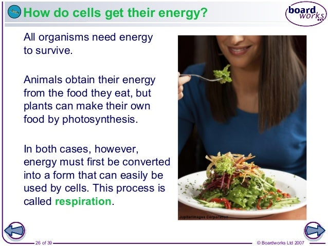 How Do Animals Obtain Energy From The Food They Eat