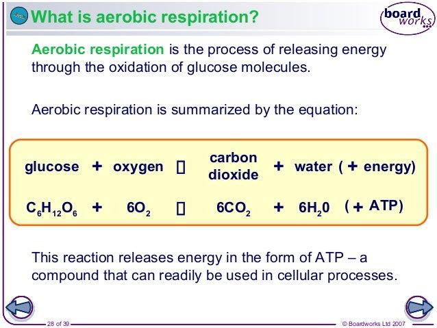 © Boardworks Ltd 200728 of 39 What is aerobic respiration? Aerobic respiration is the process of releasing energy through ...