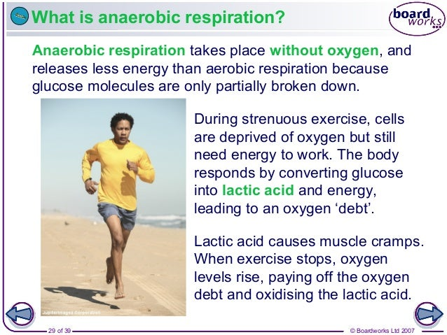 © Boardworks Ltd 200729 of 39 What is anaerobic respiration? Anaerobic respiration takes place without oxygen, and release...