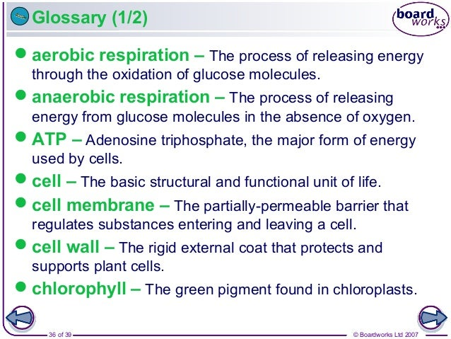 © Boardworks Ltd 200736 of 39 Glossary (1/2) aerobic respiration – The process of releasing energy through the oxidation ...