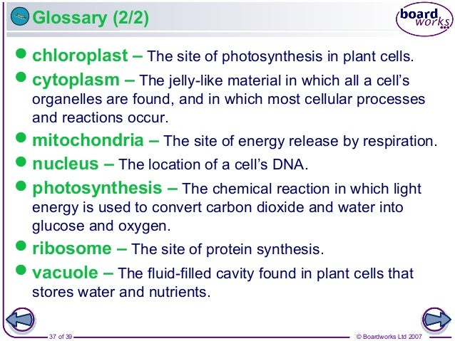 © Boardworks Ltd 200737 of 39 Glossary (2/2) chloroplast – The site of photosynthesis in plant cells. cytoplasm – The je...