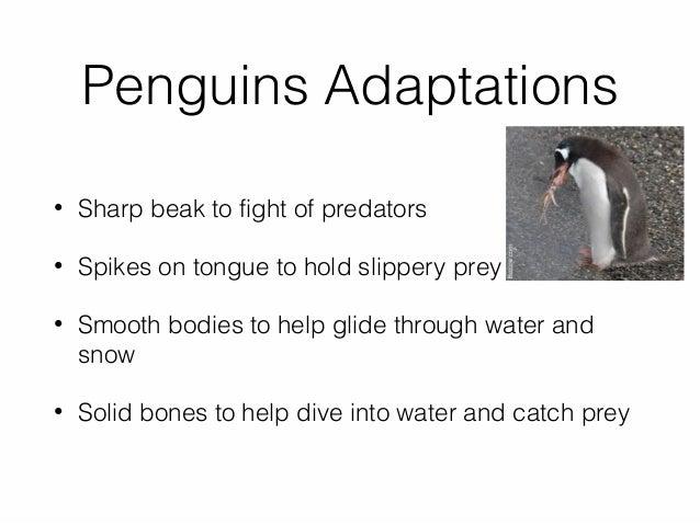 1. penguin power point