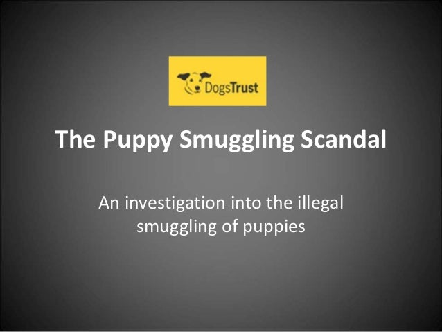 The Puppy Smuggling Scandal An investigation into the illegal smuggling of puppies