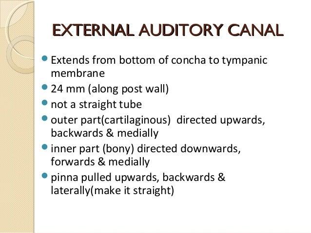 Anatomy of external ear