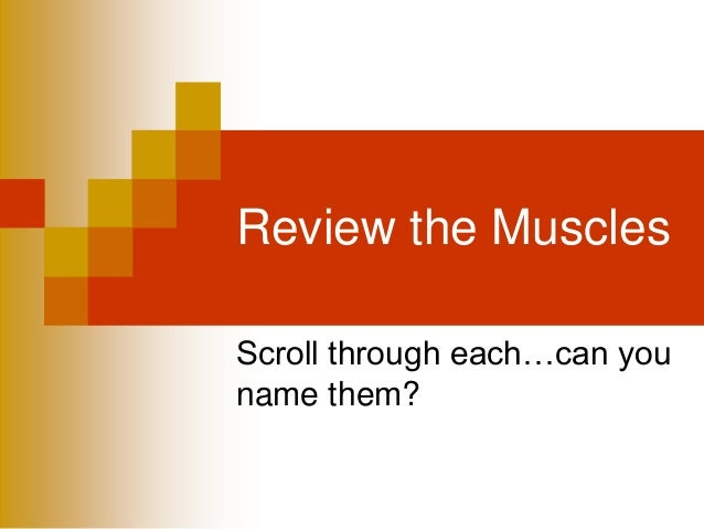 Review the Muscles Scroll through each…can you name them?