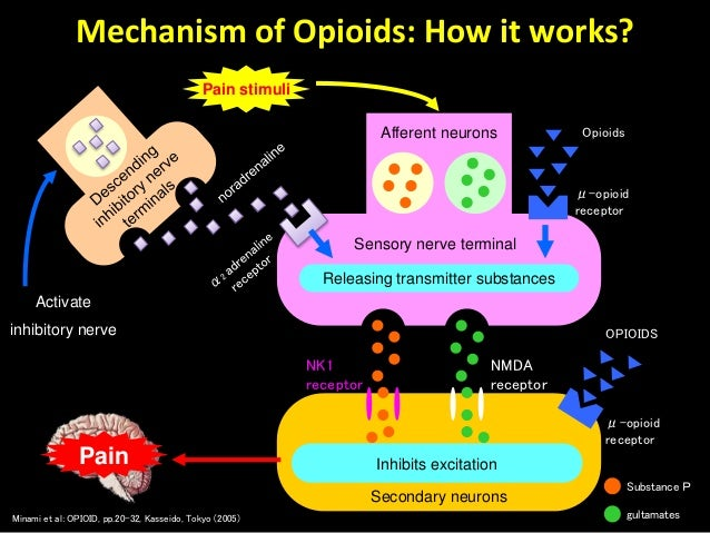 Dr Husni Paracetamol Iv As A Safety Analgesic
