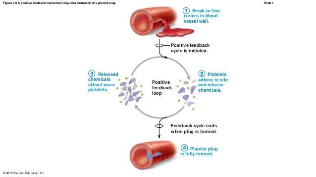 Negative feedback loop-regulates blood sugar- someone starting with high blood sugar?
