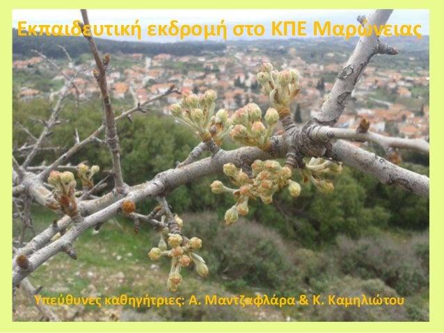 Εκπαιδευτική εκδρομή στο ΚΠΕ Μαρώνειας Υπεύθυνες καθηγήτριες: Α. Μαντζαφλάρα & Κ. Καμηλιώτου