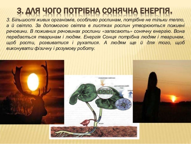3. ДЛЯ ЧОГО ПОТРІБНА СОНЯЧНА ЕНЕРГІЯ. 3. Більшості живих організмів, особливо рослинам, потрібне не тільки тепло, а й світ...