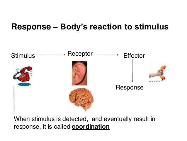 Coordination Response Part 1 The Nervous System on pain receptors body diagram