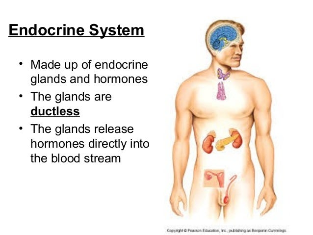 Coordination & Response Part 2 - The Endocrine System