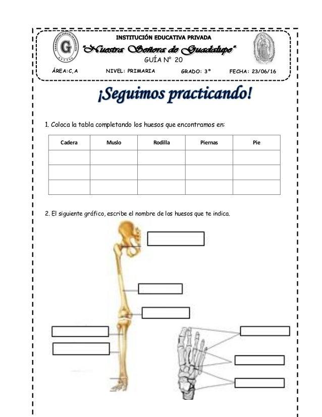 huesos de las extremidades inderiores