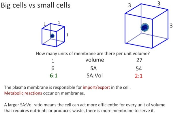 1 1 Cell Theory Cell Specialization And Cell Replacement