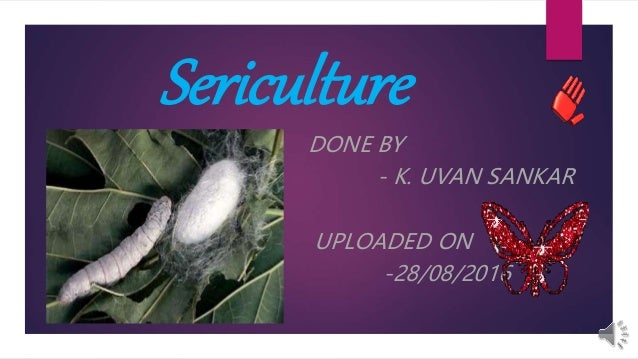 Sericulture DONE BY - K. UVAN SANKAR UPLOADED ON -28/08/2016