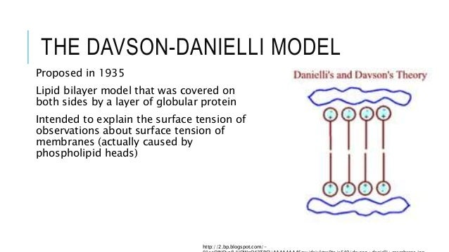Evidence for and against the davson danielli