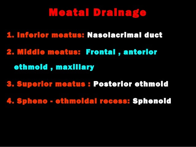 1. anatomy and physiology of nose & pns Inferior Meatus Drainage