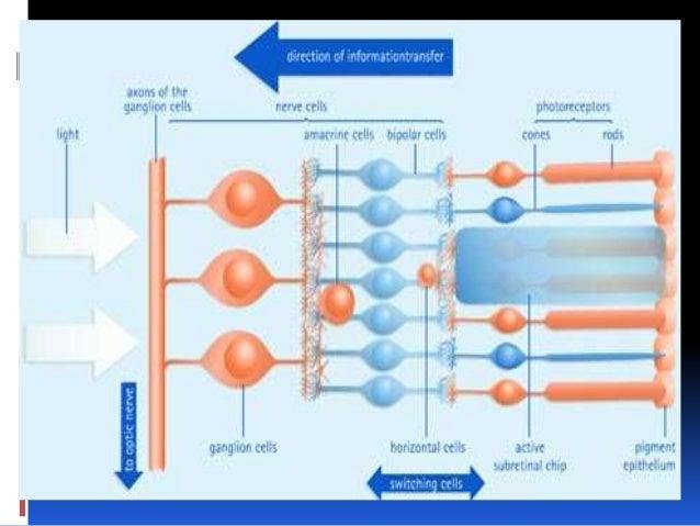 fisiologia de la retina.