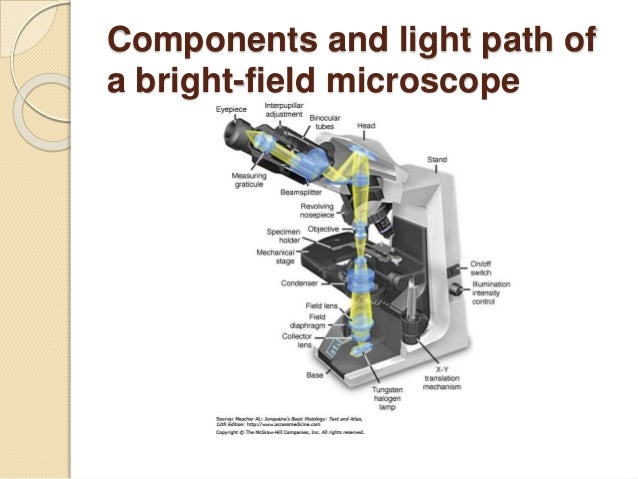 Histology its methods of study components and light path of a bright field microscope ccuart Images