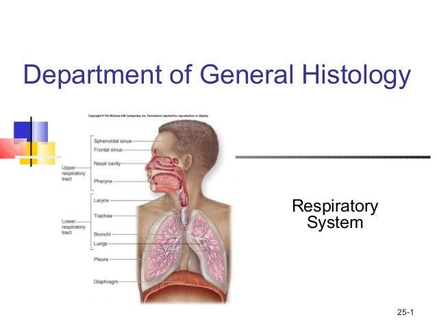 respiratory system histology - 638×479
