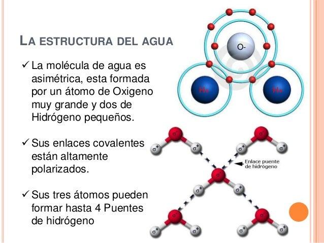 1 2 Moleculas Biológicas