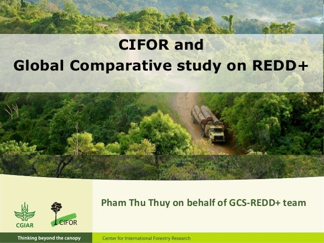 CIFOR and Global Comparative study on REDD+ Pham Thu Thuy on behalf of GCS-REDD+ team