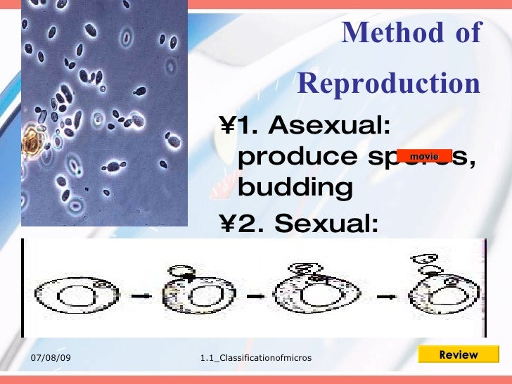 1.1 Classsification Of Microorganisms