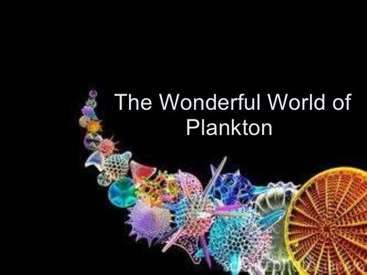 The Wonderful World of Plankton