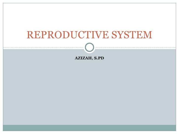 AZIZAH, S.PD REPRODUCTIVE SYSTEM