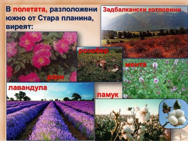 план Горската растителност, пасищата и ливадите в планините са условия за развитие на животновъдството.