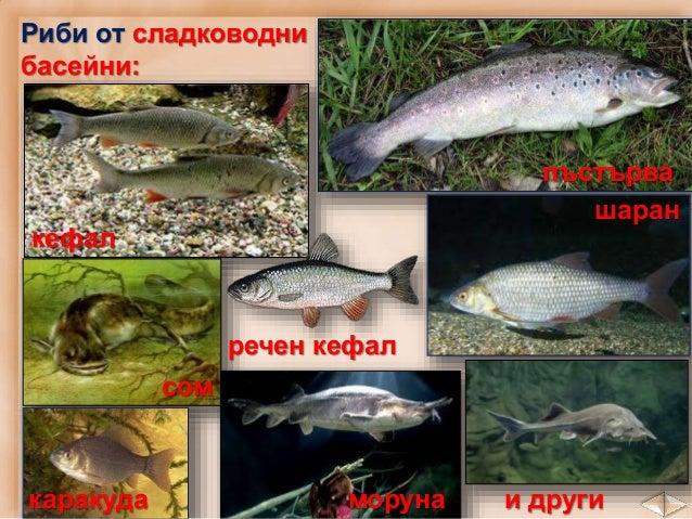 1. Запиши кои са най-разпространените селскостопански култури в:. Дунавската равнина _______________________ _____________...