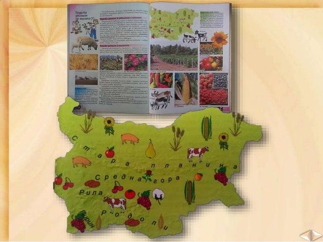 В Дунавската равнина се отглеждат ценни култури като: пшеница царевица захарно цвекло фасул рапица и други слънчоглед