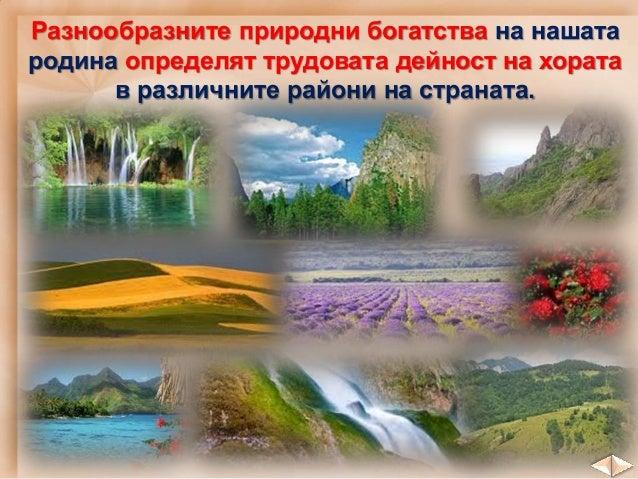 Жътва в Добруджанеузряло жито Дунавска равнина засяване узряло жито слънчоглед царевица захарно цвекло