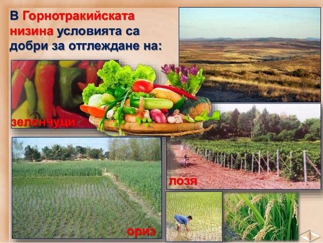 Софийско поле Карловско поле Казанлъшко поле Сливенско поле Много плодородни са и Задбалканските полета.
