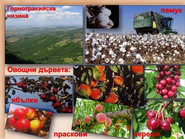 """Кюстендилската котловина е наречена """"ябълковата градина на България""""."""