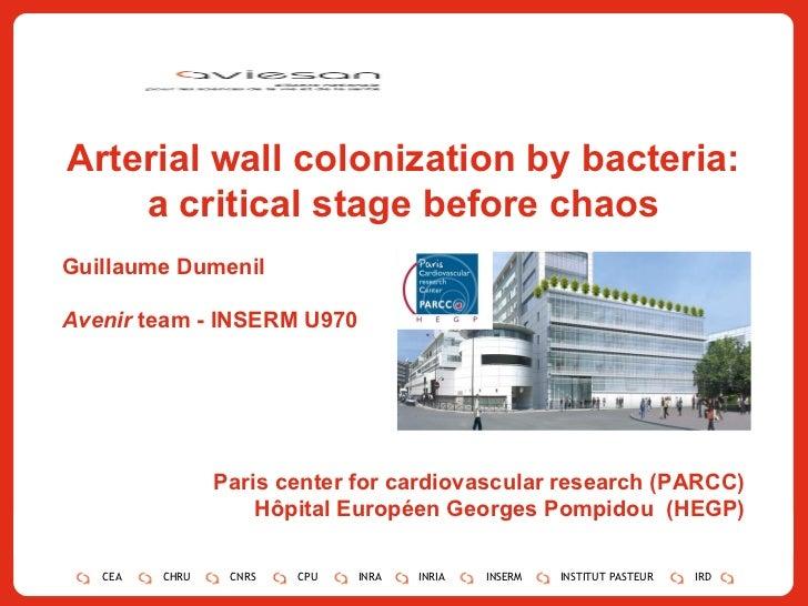 Arterial wall colonization by bacteria: a critical stage before chaos Guillaume Dumenil Avenir  team - INSERM U970 Paris c...